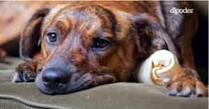 Hospitales veterinarios de la CDMX ¿Desaparecen?