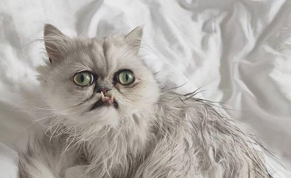 Día del gato: las estrellas del Internet