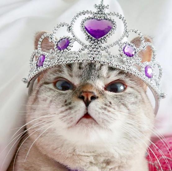 gatos influencers