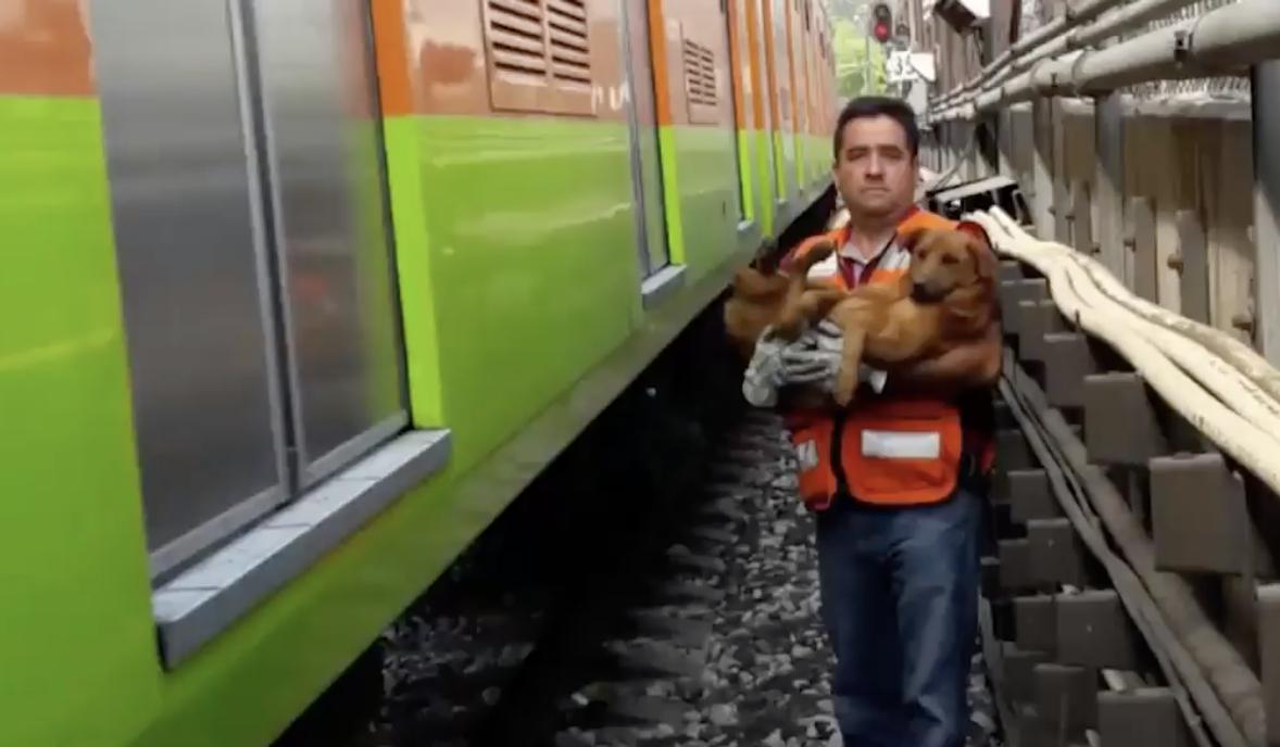 Metro de CDMX: el único en el mundo con albergue de perros