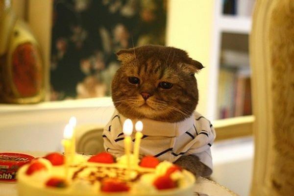 cumpleaños gato en chile deja 15 contagios de Covid-19